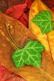 Hojas de otoño 02 Imagen de archivo libre de regalías