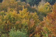 Hojas de otoño #1 Fotos de archivo libres de regalías