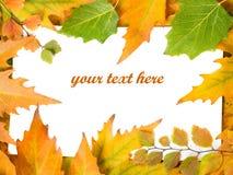 Hojas de otoño fotografía de archivo