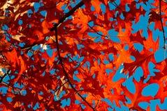 Hojas de otoño Fotografía de archivo libre de regalías
