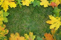 Hojas de otoño Foto de archivo