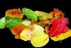 Hojas de otoño imágenes de archivo libres de regalías