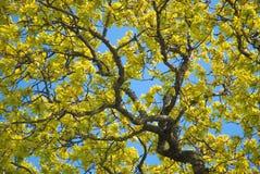 Hojas de otoño. fotografía de archivo