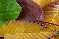 Hojas de otoño Foto de archivo libre de regalías