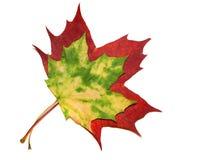Hojas de otoño Imagen de archivo libre de regalías