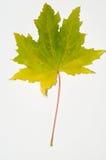 Hojas de otoño. Imagen de archivo