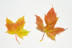 Hojas de otoño. Fotos de archivo libres de regalías
