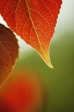 Hojas de otoño fotos de archivo