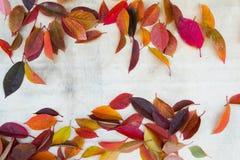 Hojas de otoño 13 Fotografía de archivo