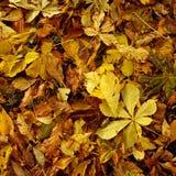 Hojas de otoño 2 Imágenes de archivo libres de regalías