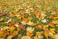 Hojas de otoño adentro Imagen de archivo libre de regalías