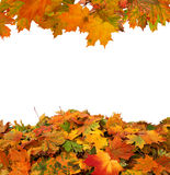 Hojas de otoño aisladas Imágenes de archivo libres de regalías