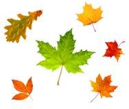 Hojas de otoño aisladas en blanco Foto de archivo libre de regalías
