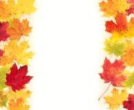 Hojas de otoño aisladas en el fondo blanco Foto de archivo libre de regalías