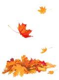 Hojas de otoño aisladas en el fondo blanco Imagen de archivo libre de regalías