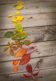 Hojas de otoño alineadas en un círculo Imagen de archivo libre de regalías