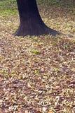Hojas de otoño alrededor de un árbol Fotos de archivo libres de regalías