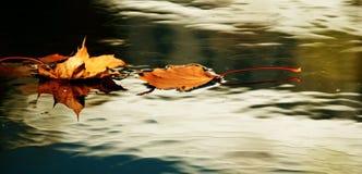 Hojas de otoño amarillas Foto de archivo libre de regalías