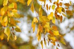 Hojas de otoño amarillas en fondo natural Imagenes de archivo