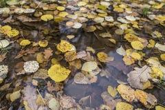 Hojas de otoño amarillas en un charco de la lluvia Foto de archivo libre de regalías