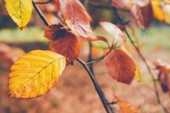 Hojas de otoño amarillas en una rama en colores y blurre silenciados agradables Imagen de archivo