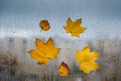 Hojas de otoño amarillas en una ventana Fotos de archivo