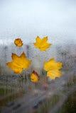 Hojas de otoño amarillas en una ventana Fotografía de archivo