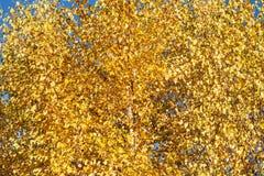 Hojas de otoño amarillas, fondo abstracto Imagenes de archivo