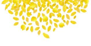 Hojas de otoño amarillas que caen Foto de archivo