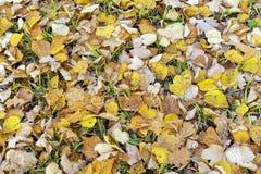 Hojas de otoño amarillas y anaranjadas en la hierba fotos de archivo