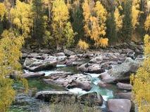 Hojas de otoño amarillas y corriente rocosa imagen de archivo libre de regalías