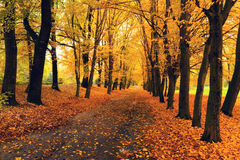 Hojas de otoño anaranjadas Fotografía de archivo libre de regalías