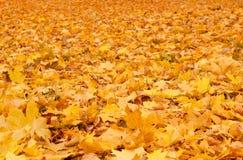 Hojas de otoño anaranjadas de la caída en la tierra Imagenes de archivo