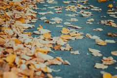 Hojas de otoño anaranjadas en el asfalto foto de archivo libre de regalías