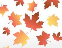 Hojas de otoño [arce] Foto de archivo libre de regalías