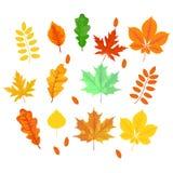 Hojas de otoño arce, roble, abedul, castaña y otras plantas de Imagen de archivo