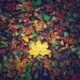 Hojas de otoño bajo pies Imagen de archivo libre de regalías