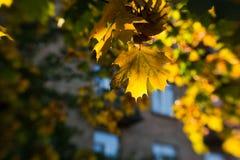 Hojas de otoño borrosas en el sol, fondo abstracto, bokeh, siendo autor del proceso, foco selectivo Imágenes de archivo libres de regalías