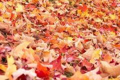 Hojas de otoño brillantes imagenes de archivo
