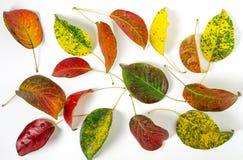 Hojas de otoño brillantes Foto de archivo