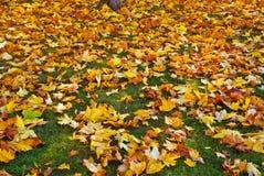 Hojas de otoño caidas Fotos de archivo libres de regalías