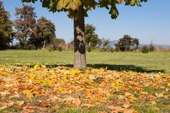 Hojas de otoño caidas Fotografía de archivo libre de regalías