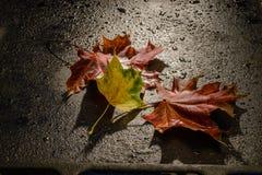 Hojas de otoño caidas Foto de archivo libre de regalías
