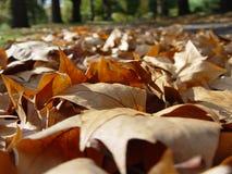 Hojas de otoño caidas foto de archivo