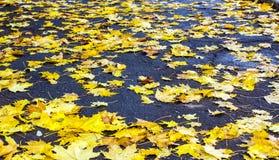 Hojas de otoño Caidas-abajo Fotos de archivo