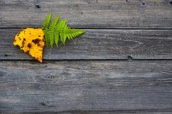 Hojas de otoño caidas amarillas y verdes coloridas en fondo gris de madera Imagen de archivo