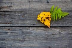 Hojas de otoño caidas amarillas y verdes coloridas en fondo gris de madera Fotos de archivo libres de regalías