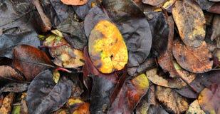 Hojas de otoño caidas coloridas que mienten en la tierra Imagenes de archivo