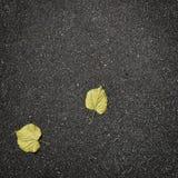 Hojas de otoño caidas en el asfalto puro Fotos de archivo