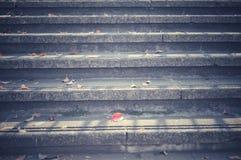 Hojas de otoño caidas en escaleras fotografía de archivo libre de regalías